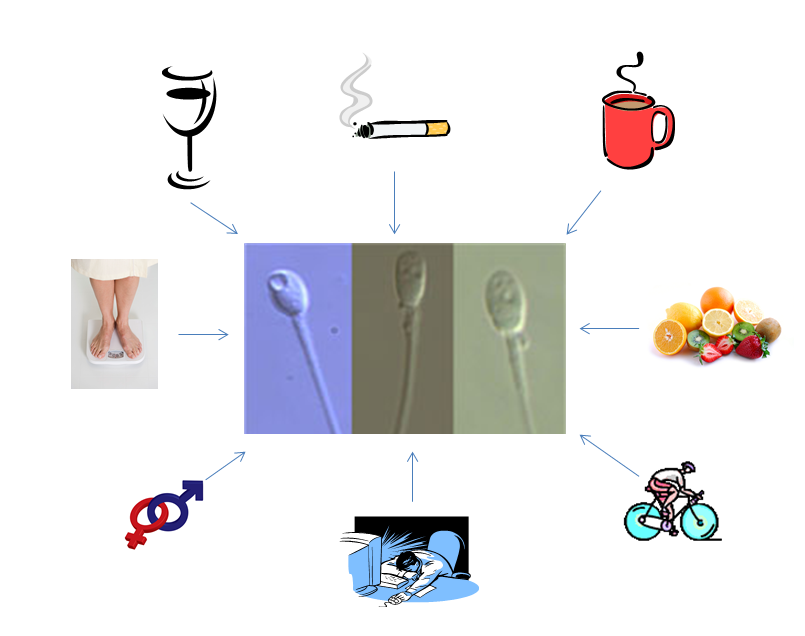 Lifestylefaktoren beeinflussen den Erfolg der IVF-Therapie